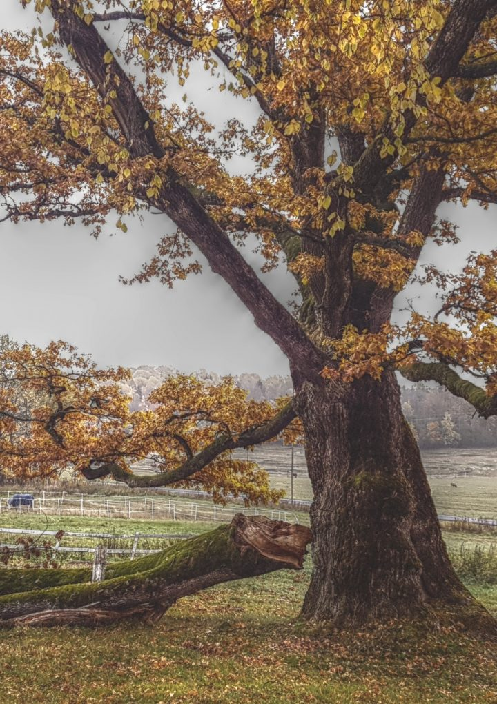 Hva finnes i skogen- mellom trærne- i den norske folkesjela?